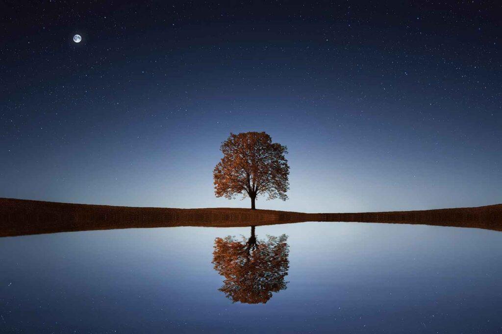 Hipnoterapija - drevo